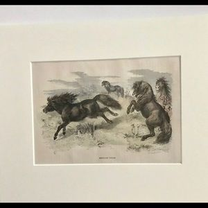 Antique Hand Colored Engraving Shetland Ponies